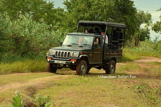 Udawalawe Safari Fun: Safari in udawalawe national park