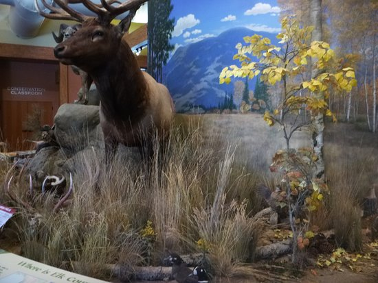 ‪‪Rocky Mountain Elk Foundation‬: display‬