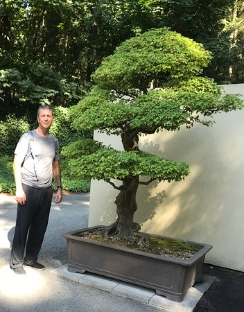 Over 100 Years Old Awesome Picture Of Pacific Bonsai Museum Federal Way Tripadvisor