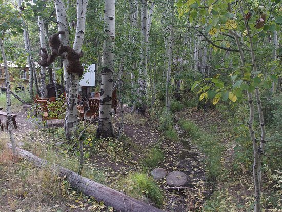 Hope Valley, แคลิฟอร์เนีย: Some really cute bear sculptures on the property