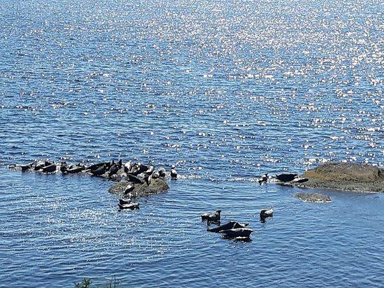 Parc national de l'Ile-Bonaventure-et-du-Rocher-Perce: phoques