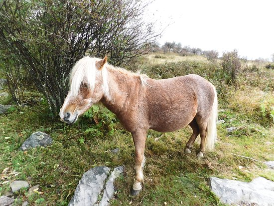 Grayson Highlands State Park: Wild pony on federal land.