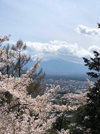 Fuji Sengen Jinja Shrine: 階段上付近から