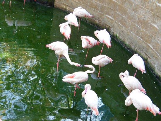 Africa Alive!: Flamingos