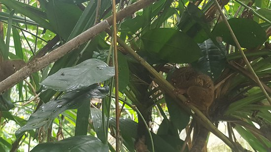 Philippine Tarsier Recreation Inc.