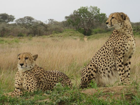 Phinda Private Game Reserve, South Africa: Two Brothers
