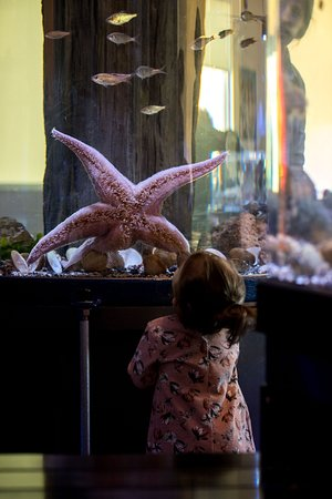 Gibsons, Canada: Admiring the Giant Pink Seastar - photo by Dolf Vermeulen Creative