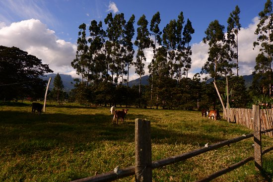 Oxapampa, Перу: Nature