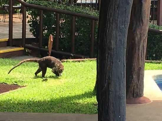 Punta Islita, Costa Rica: Some strange animal near the restaurant
