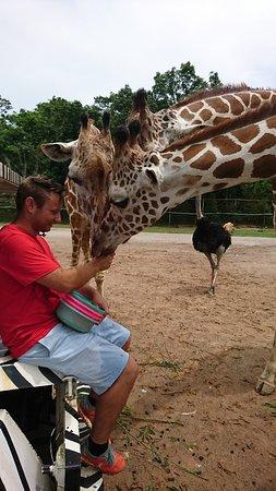 สวนสัตว์เปิด ซาฟารี ปาร์ค: DSC_2412_large.jpg