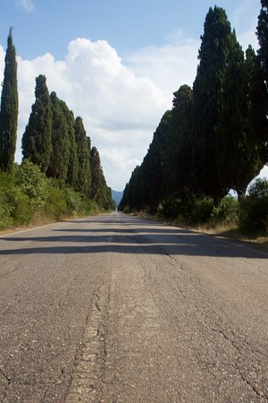 Viale dei Cipressi: Cipressi