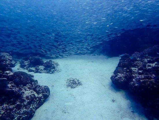 Cebu Fun Divers: FB_IMG_1537502604134_large.jpg