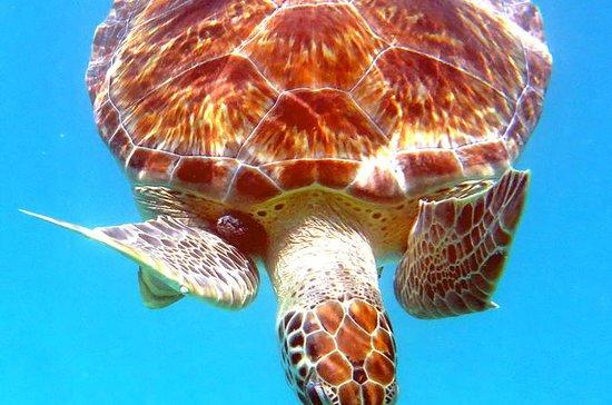 Kajak und Meeresschildkröte...