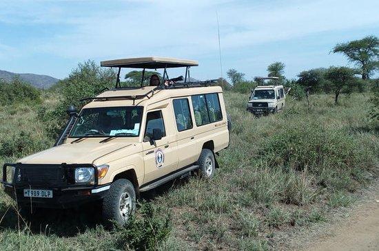 11 jours de safari kenya et tanzanie...