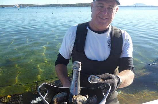 Oyster Farm and Tasting Tour with...