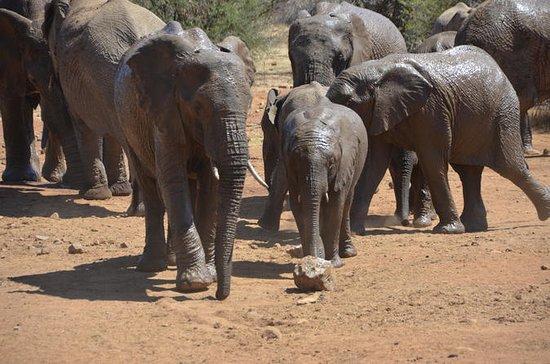 Safari do Parque Nacional de...