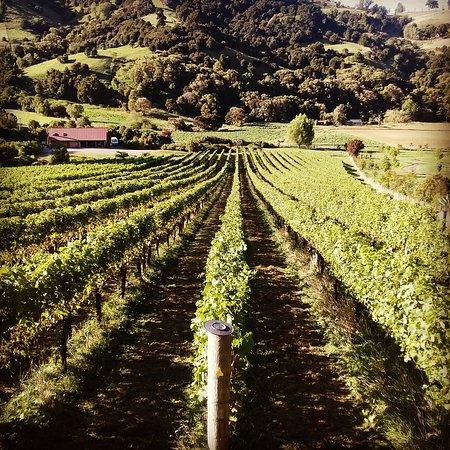 Akaroa, نيوزيلندا: French peak chardonnay 