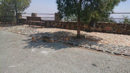 Larnaka District, Cyprus: Куда же без них