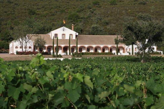 Retuerta del Bullaque, إسبانيا: vista a la bodega desde el viñedo