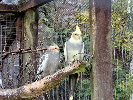 Ardencraig Gardens: The Aviary