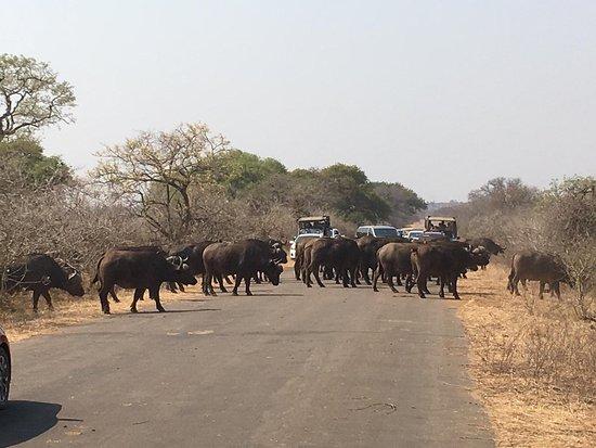 Sentashya Safaris: IMG-20180918-WA0012_large.jpg