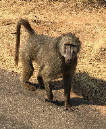 Sentashya Safaris: IMG-20180918-WA0015_large.jpg
