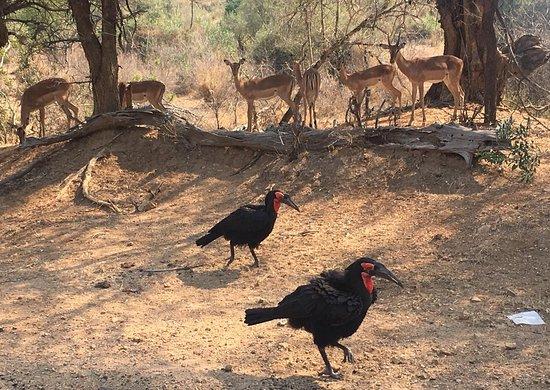 Sentashya Safaris: IMG-20180918-WA0014_large.jpg