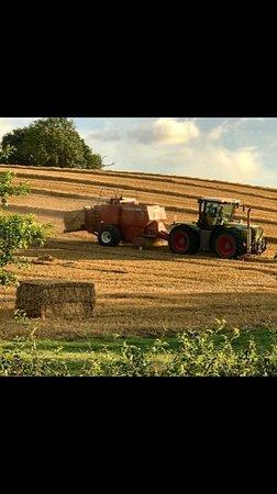 Kislingbury, UK: Bringing in the Harvest - Farm to Fork