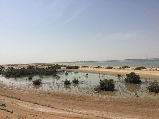 Ruwais, Emirati Arabi Uniti: View along the way