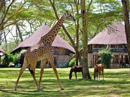 Discover African Trails