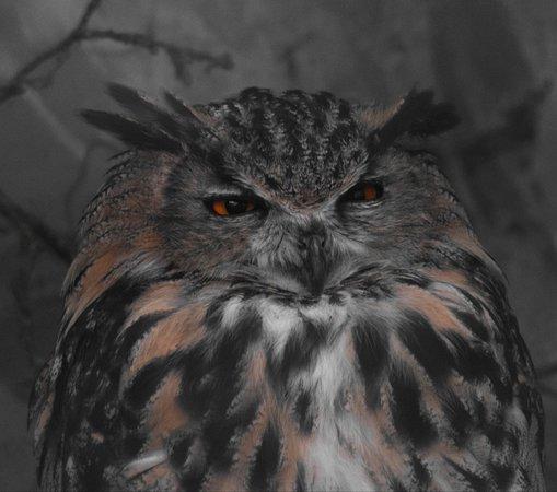 British Wildlife Centre: IMG_20180818_175619_large.jpg