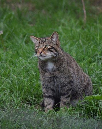 British Wildlife Centre: IMG_20180818_175345_large.jpg