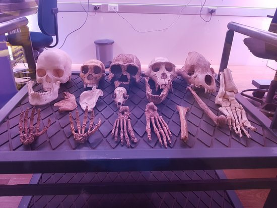 Cradle of Humankind World Heritage Site, South Africa: Cradle of Humankind