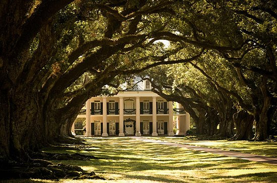 Oak Alley Plantation and Large...