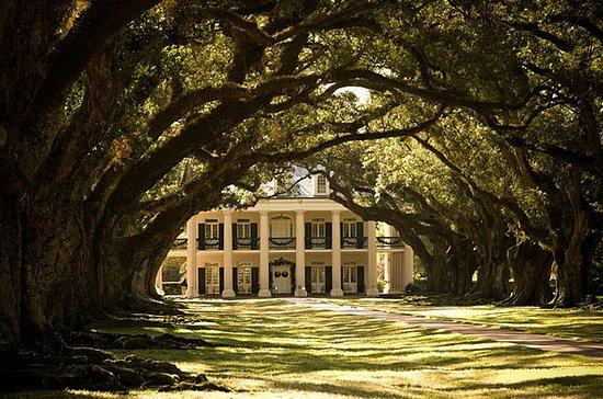 Tour de Oak Alley Plantation y Large...