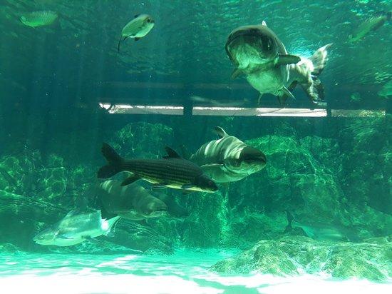 Singapore Zoo Photo
