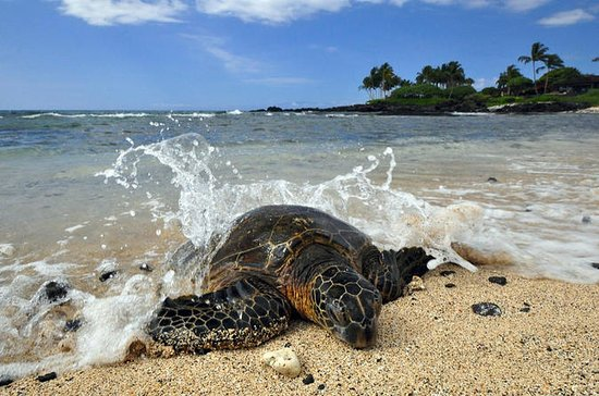Kona Shore Excursion: Hawaiian Sea ...