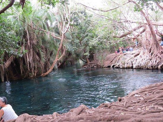 Kikuletwa Hotsprings: Chemka Hotspring with Safari Bando