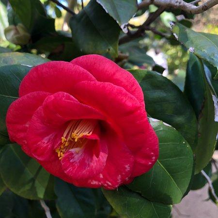 Royal Botanic Gardens Victoria: photo4.jpg