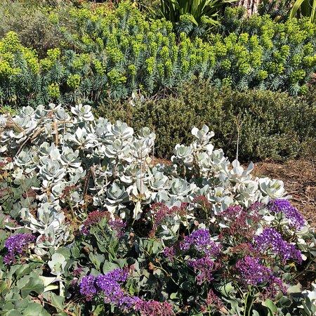 Royal Botanic Gardens Victoria: photo5.jpg