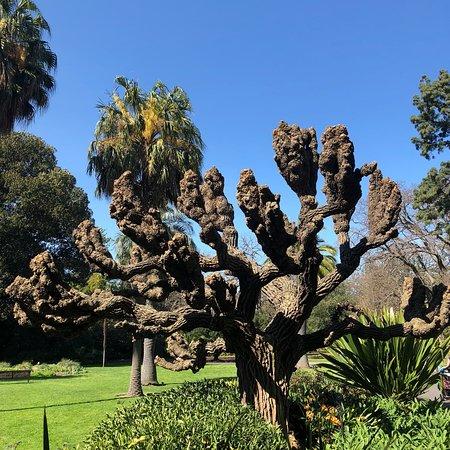 Royal Botanic Gardens Victoria: photo6.jpg