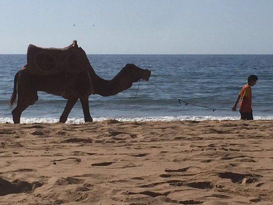Imi Ouaddar, โมร็อกโก: Voor wie en ritje op een kameel wil maken