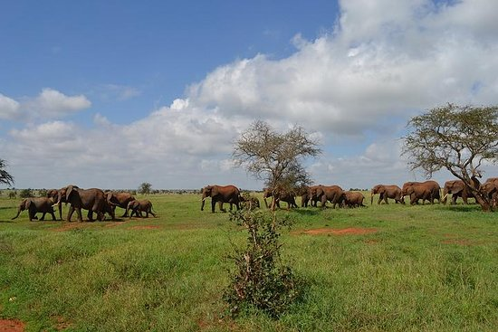 The Best of Africa Safari Company Ltd