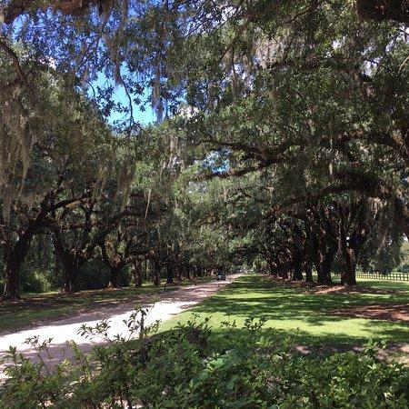 Boone Hall Plantation: photo0.jpg