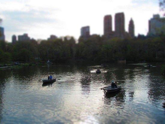 Central Park: FB_IMG_1537619975592_large.jpg