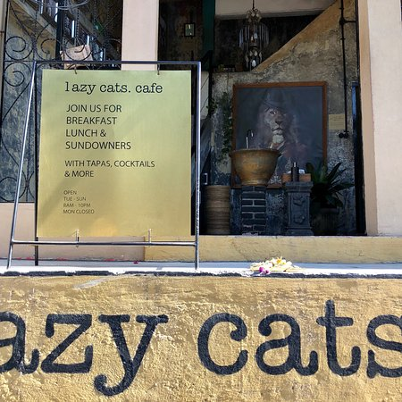 Lazy Cats Cafe