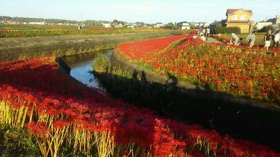Handa, Japan: ごんの秋祭り