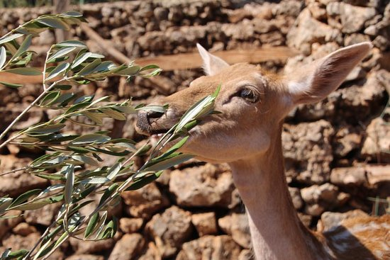 Volimes, Greece: Little Bambi you friend within 2 minutes... :-)