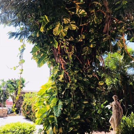 The Buccaneer St Croix: photo4.jpg