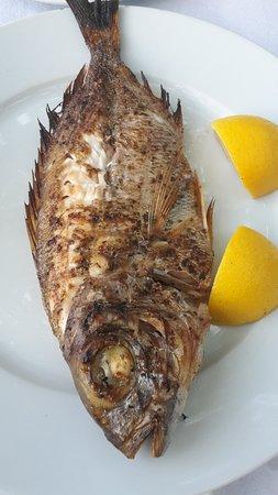 Πήλιο, Ελλάδα: Frischer Fisch aus der Ägäis